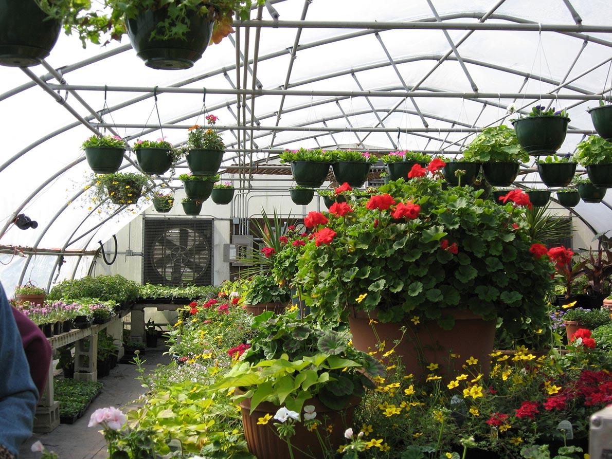 cây trồng trong nhà kính có gì khác cây trồng ngoài tự nhiên