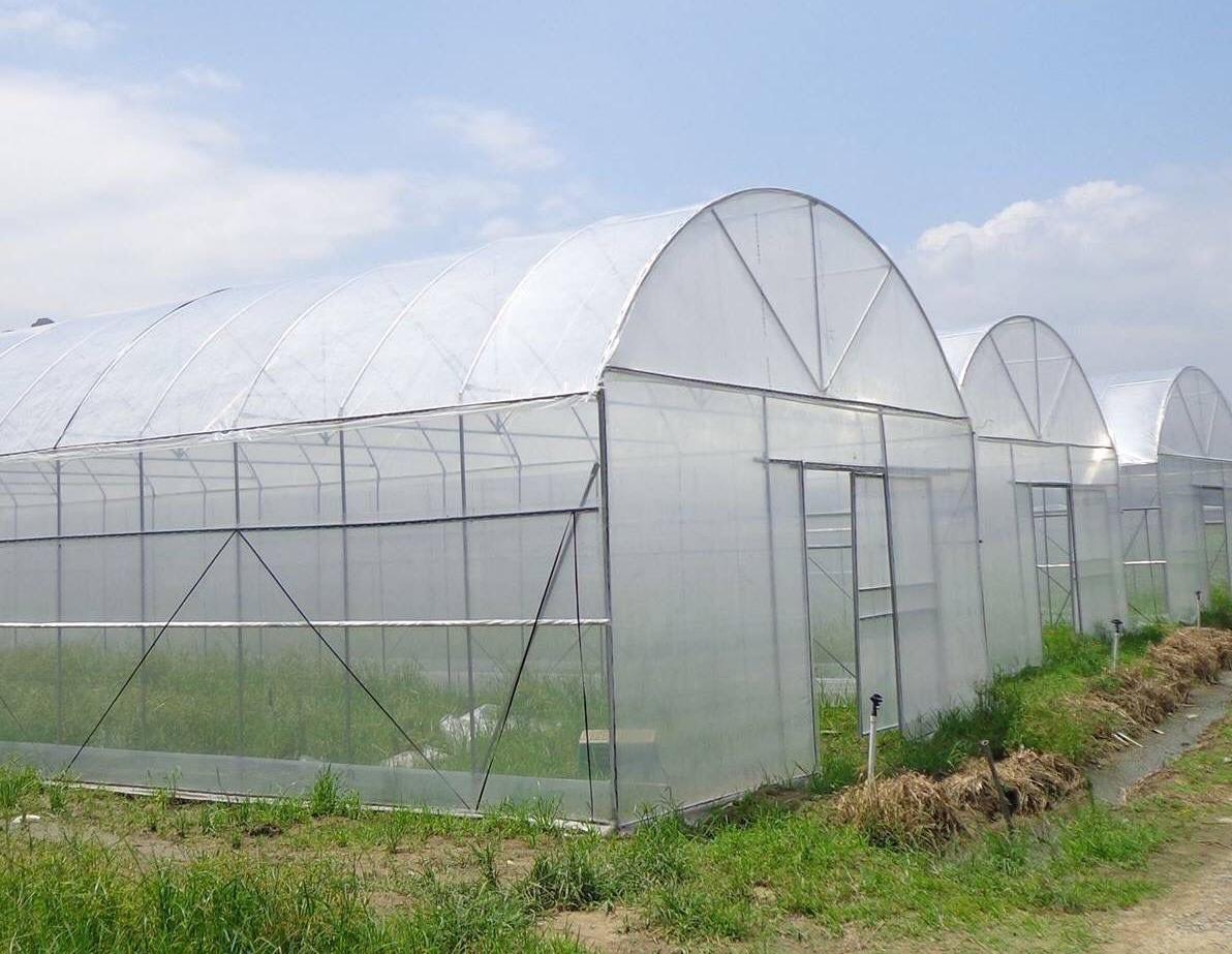 công trình nhà kính nông nghiệp dùng màng nhà kính giá rẻ 5m ngang