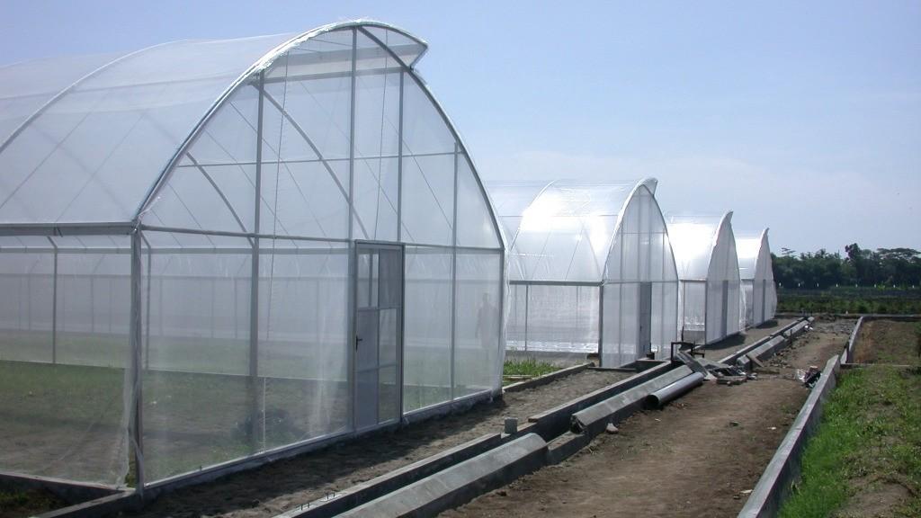 cuộn màng pe nhà kính nông nghiệp khổ ngang 3.2m