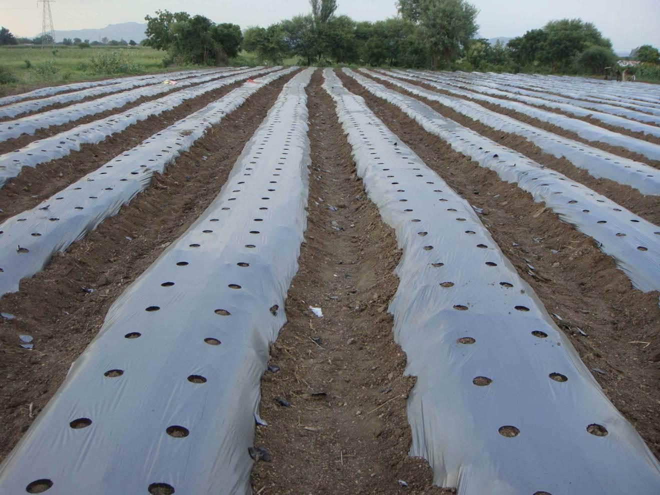 cuộn màng phủ đất nông nghiệp chất lượng cao