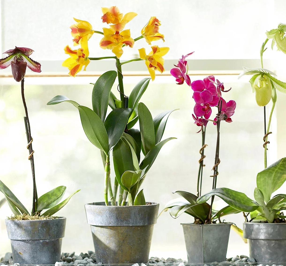 điều kiện ánh sáng lý tưởng để trồng hoa lan