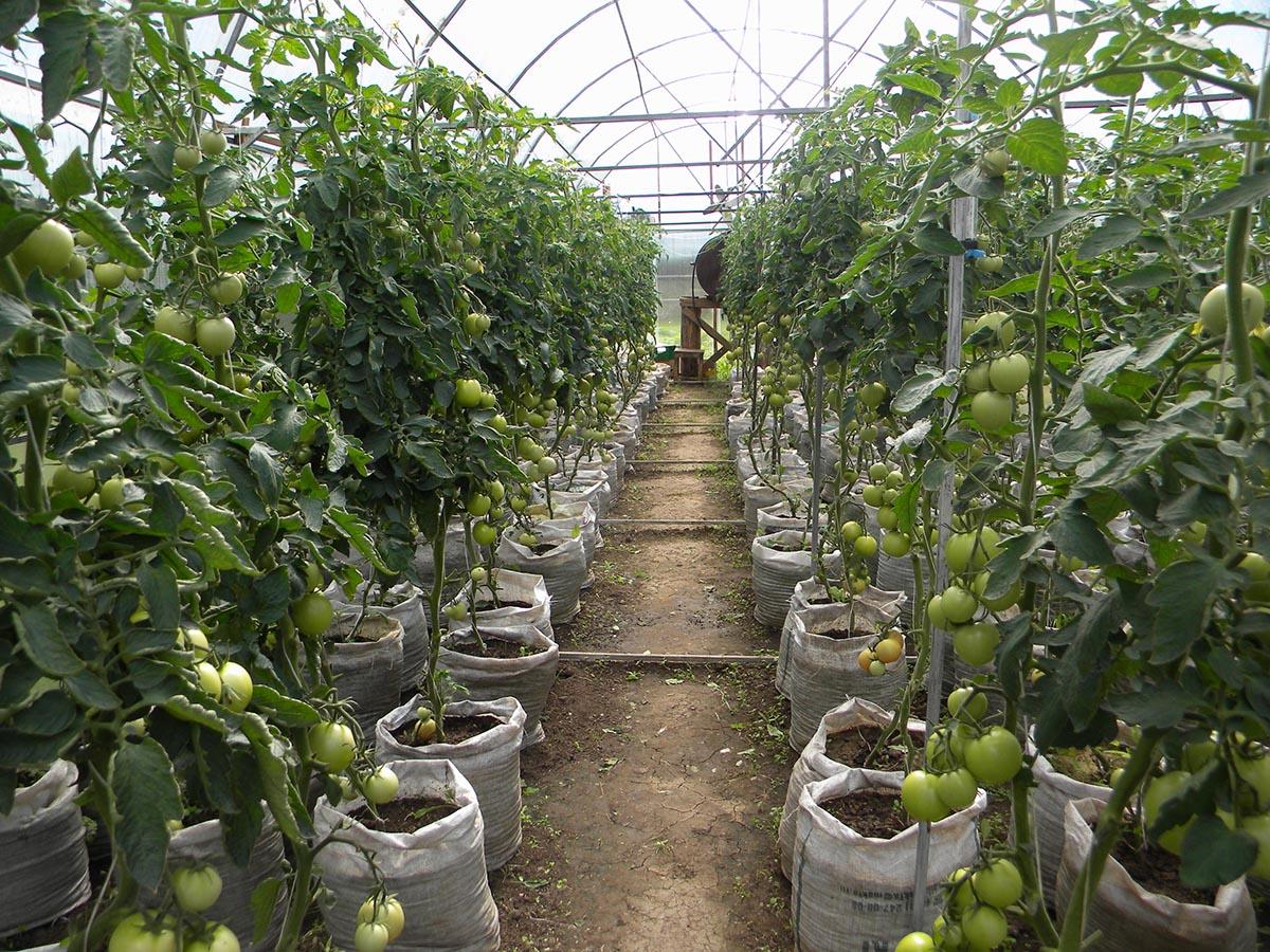 lợi ích của màng nhà kính trong trồng cây nông nghiệp