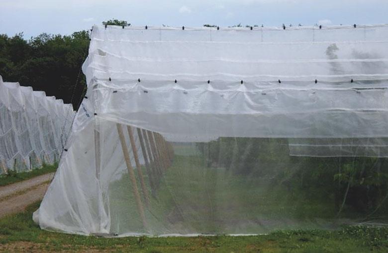 nơi bán cuộn lưới chắn côn trùng Đài Loan 32 Mesh khổ 2m x 50m