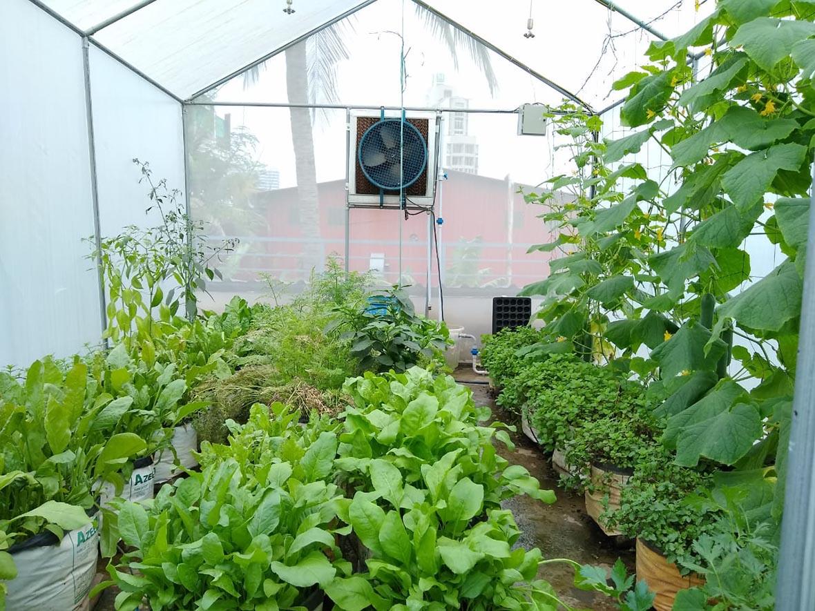 mẫu nhà kính sân thượng trồng rau đẹp