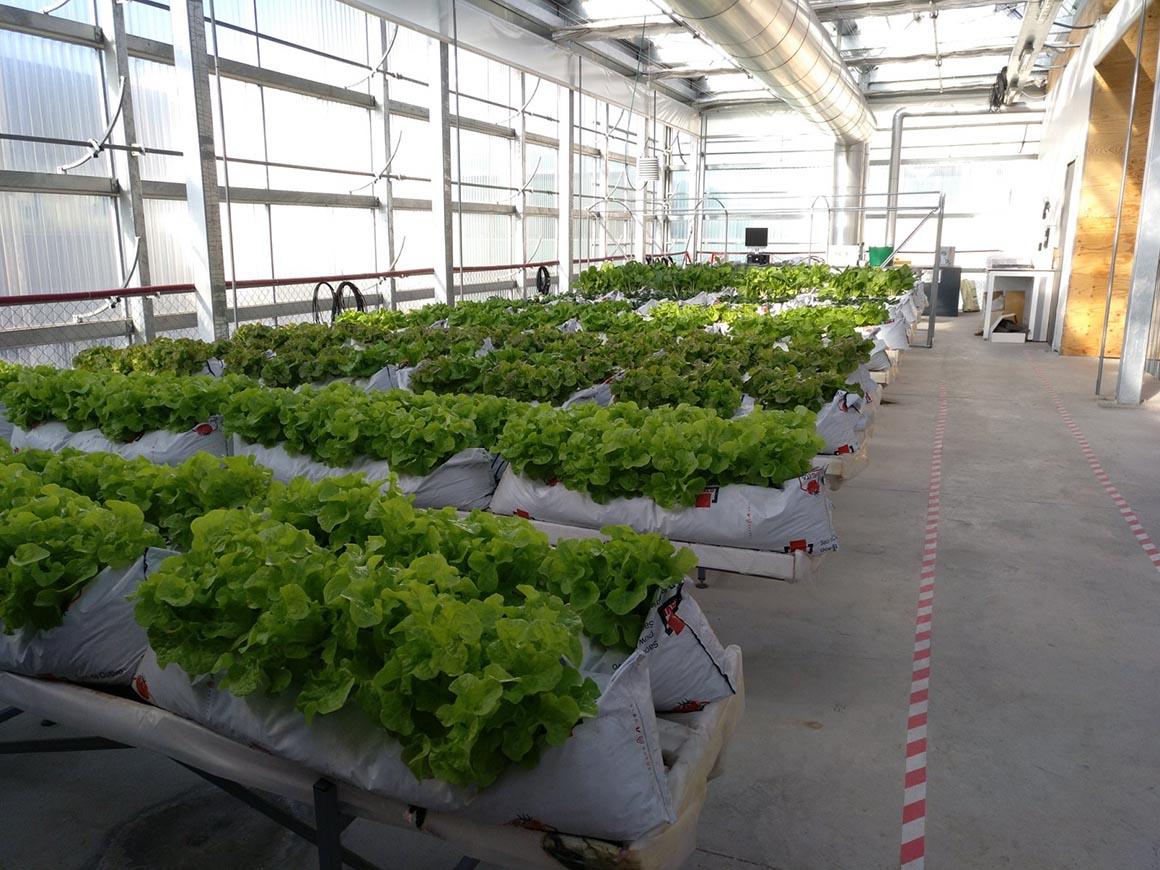 mẫu nhà kính trồng rau trên sân thượng đẹp