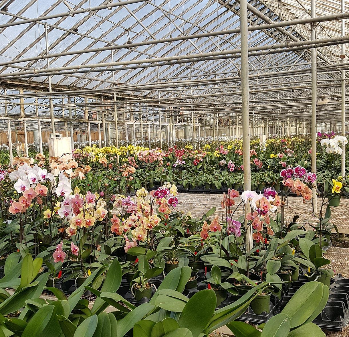 mẫu nhà kính trồng hoa lan đẹp
