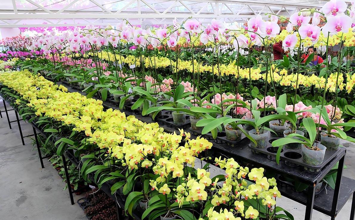 mẫu nhà kính poly trồng hoa lan đẹp