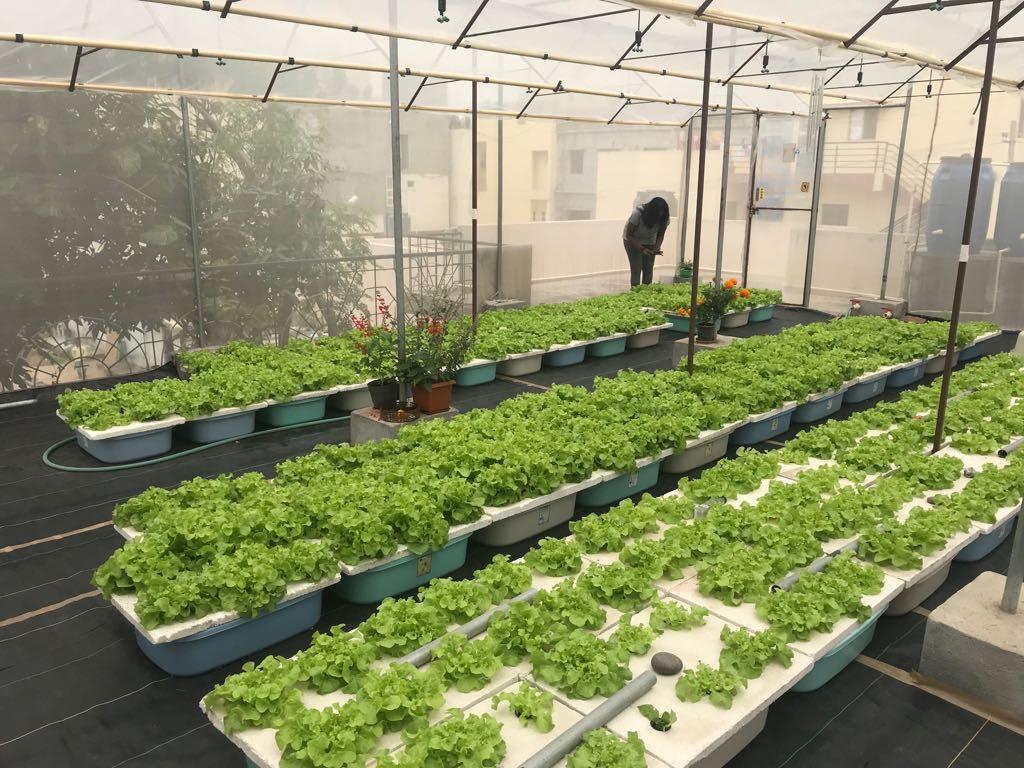 mô hình trồng rau sân thượng là gì