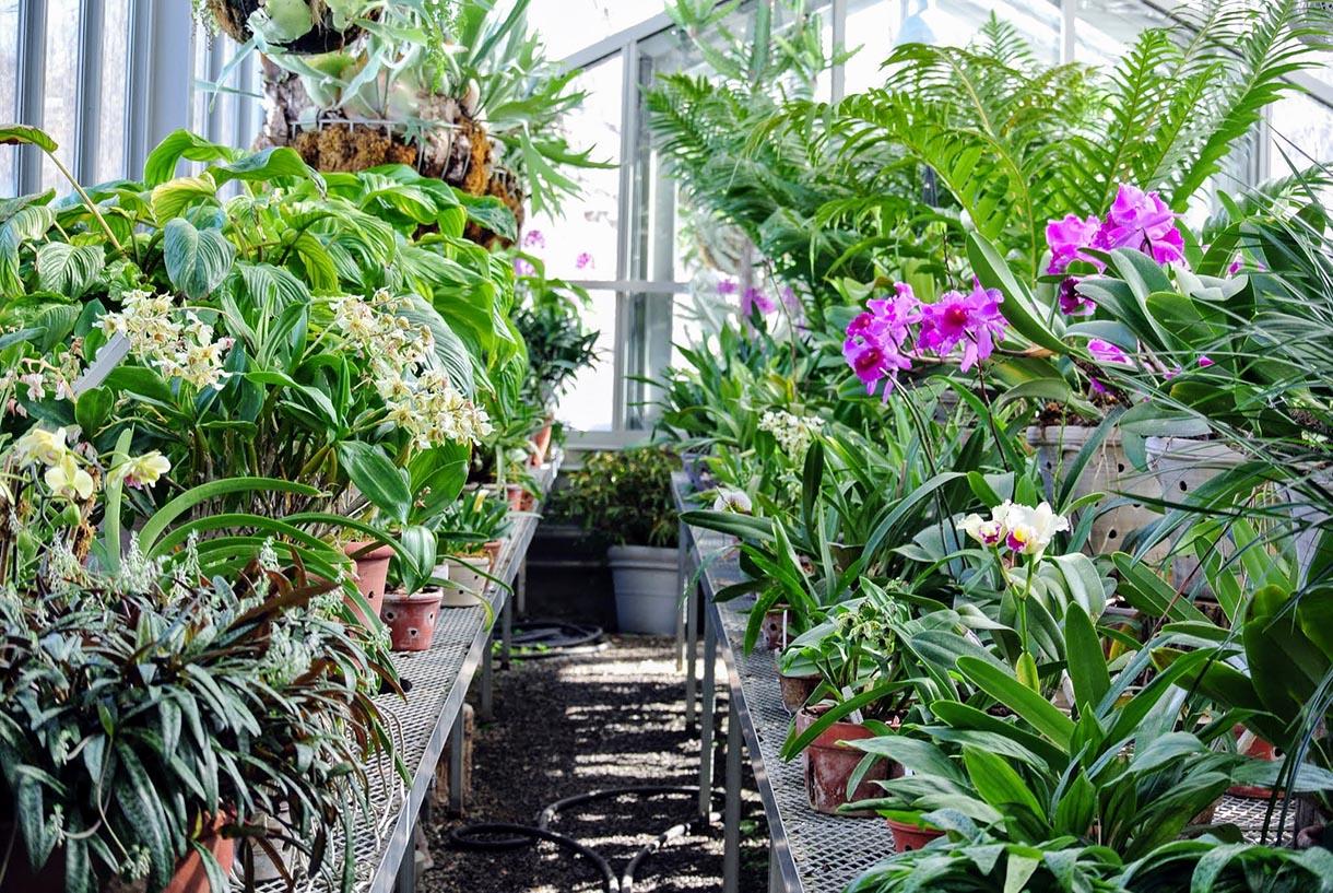 nhà kính mini trồng hoa lan trên sân thượng