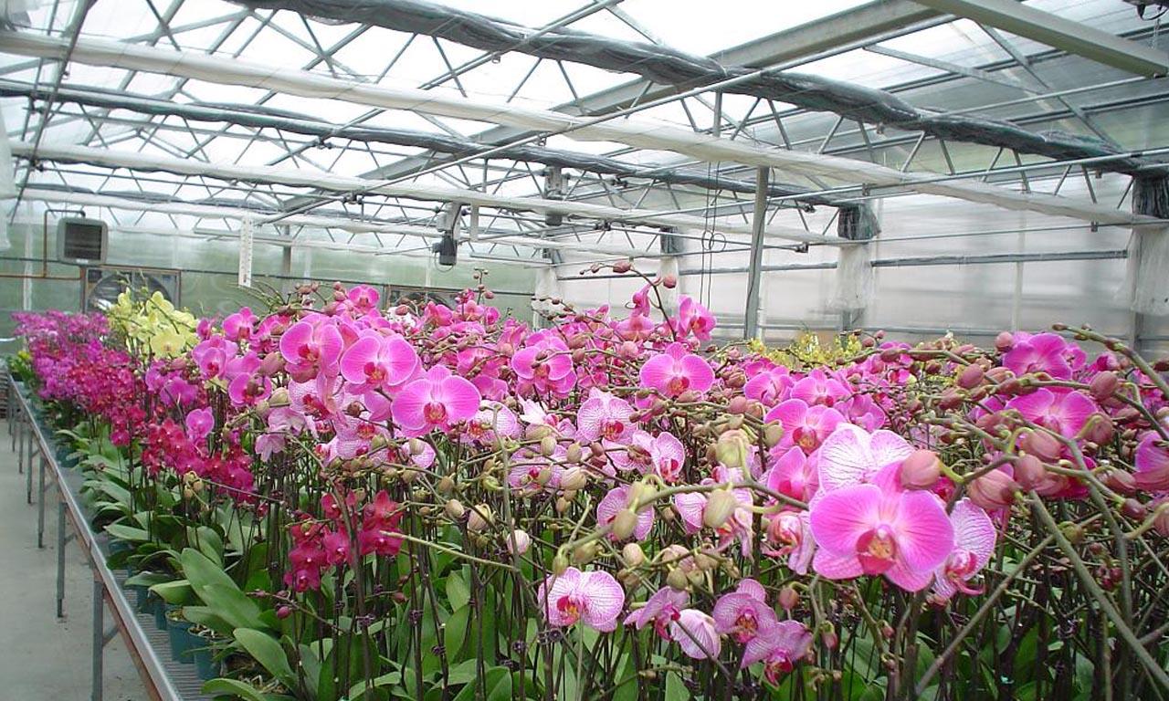 Mẫu tấm lợp lấy sáng trồng lan phù hợp cho hoa phong lan