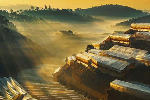 4 Mẫu màng nhà kính được lựa chọn nhiều nhất cho công trình Việt