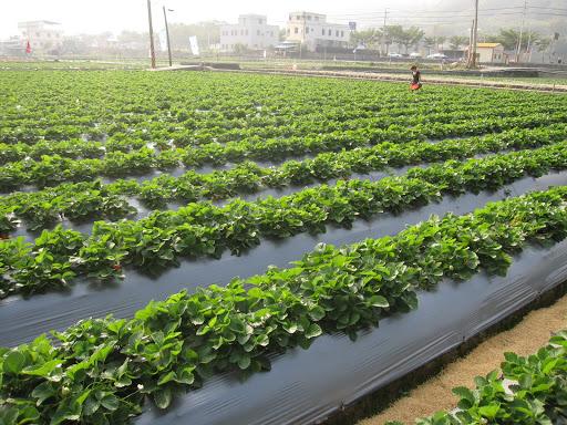 Mẫu bạt phủ đất nông nghiệp bán chạy Số #1 trong năm