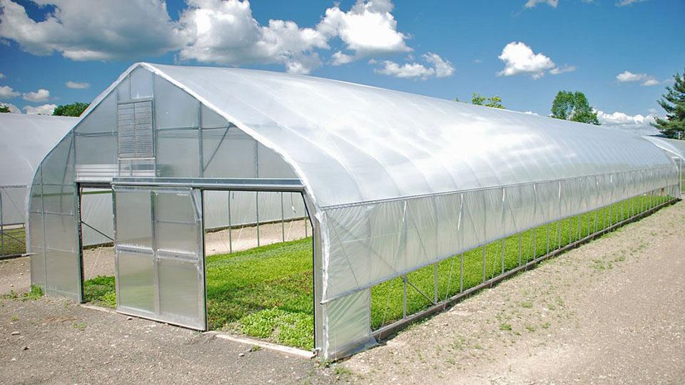 Vì sao ánh sáng xuyên qua nhà kính lại tốt cho cây trồng?