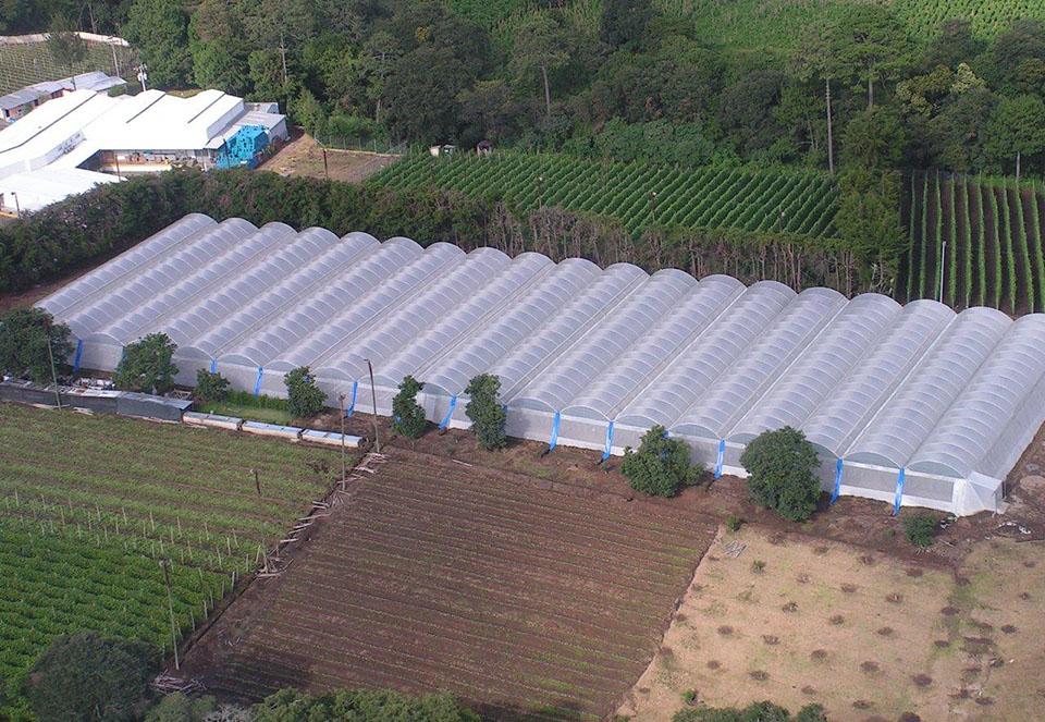 Xu hướng trồng cây trong nhà kính làm nông nghiệp hiện đại