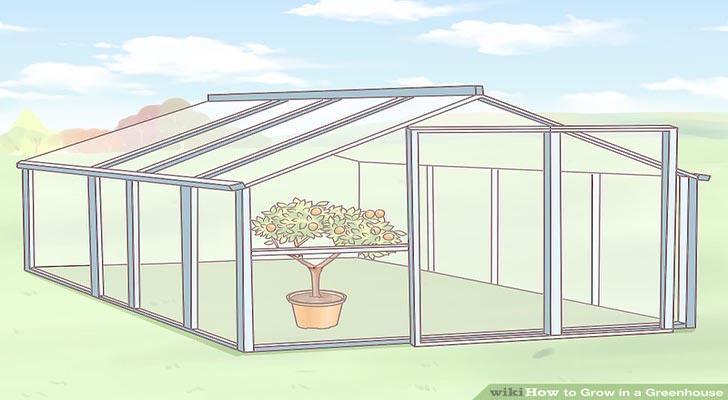 Bí quyết trồng cây trong nhà kính đạt hiệu quả cao bạn nên biết
