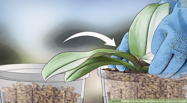 Cách trồng hoa lan trong nhà kính cho hoa đẹp khỏe mạnh