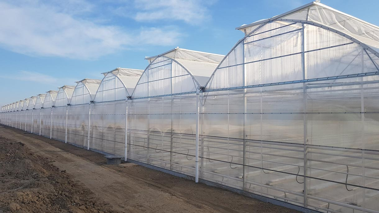 Nhà kính sử dụng lưới chắn côn trùng quy mô lớn