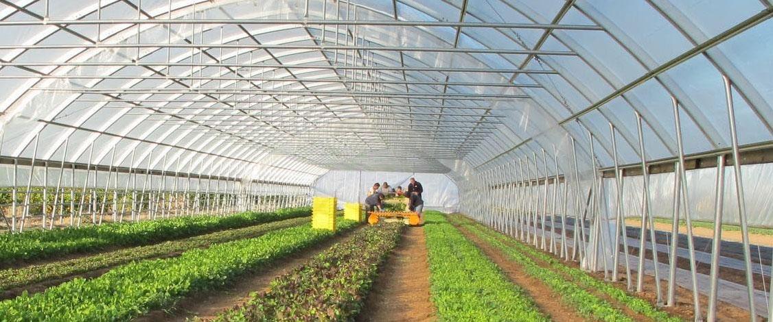 công trình nhà kính nông nghiệp ứng dụng màng phủ pe politiv israel