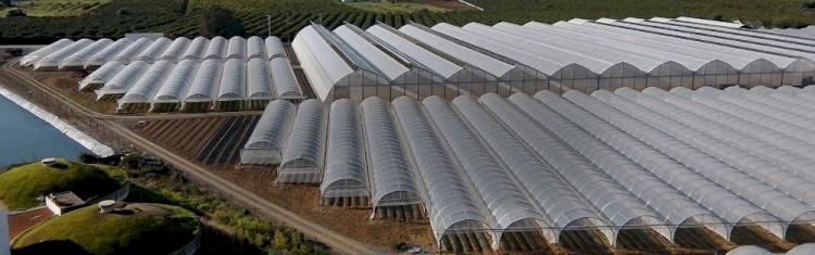 Ứng dụng màng che nhà kính hyplast trong nông nghiệp