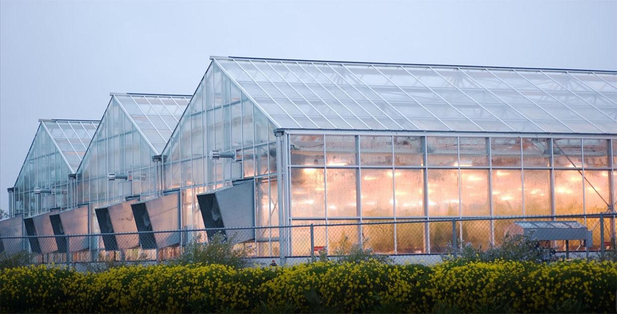 nhà kính nông nghiệp lợp mái bằng tấm lợp lấy sáng polycarbonate dạng đặc ruột